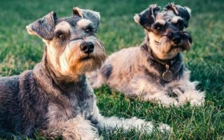 O cachorro de Escorpião: saiba as características do seu pet escorpiano